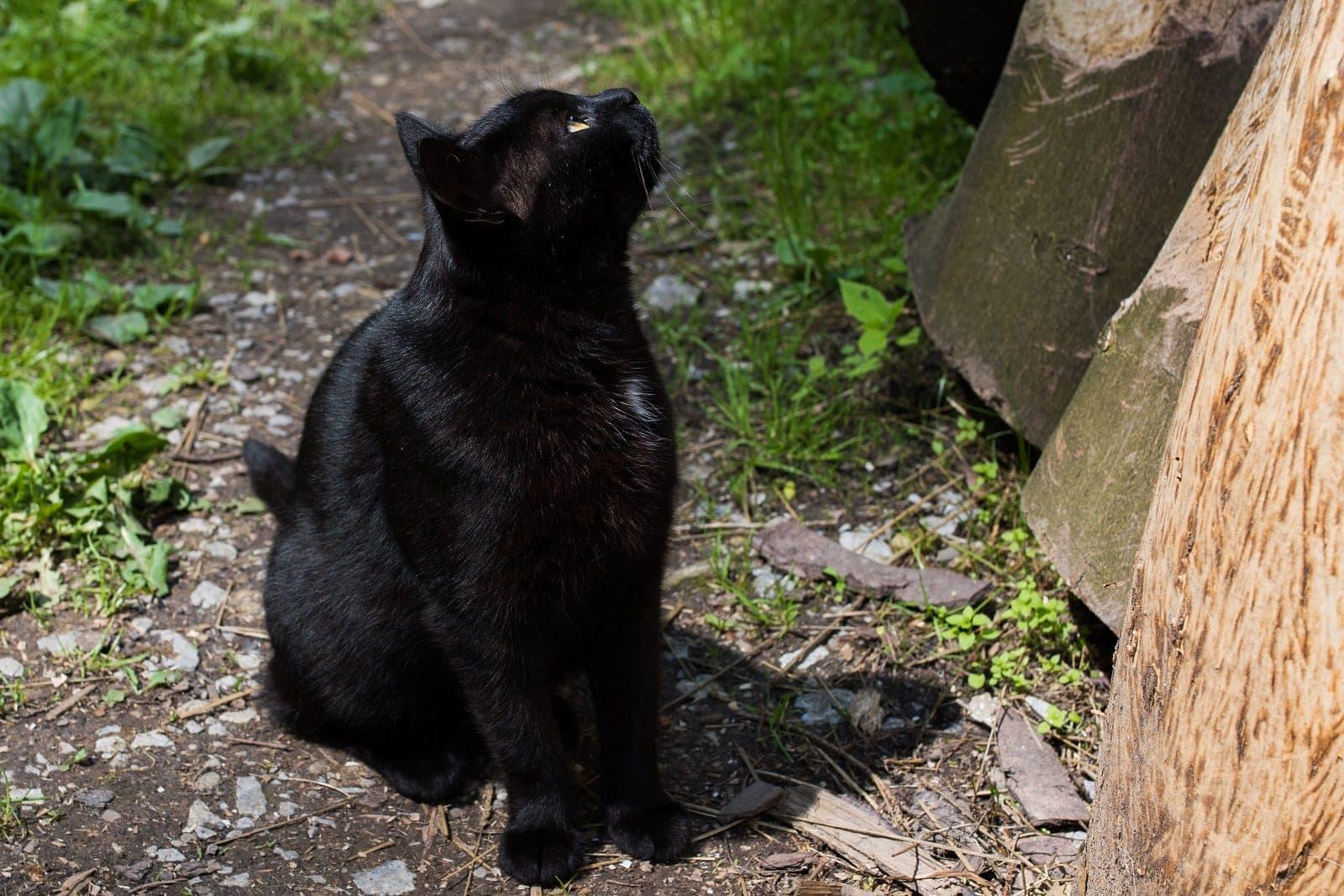 Kočka 1