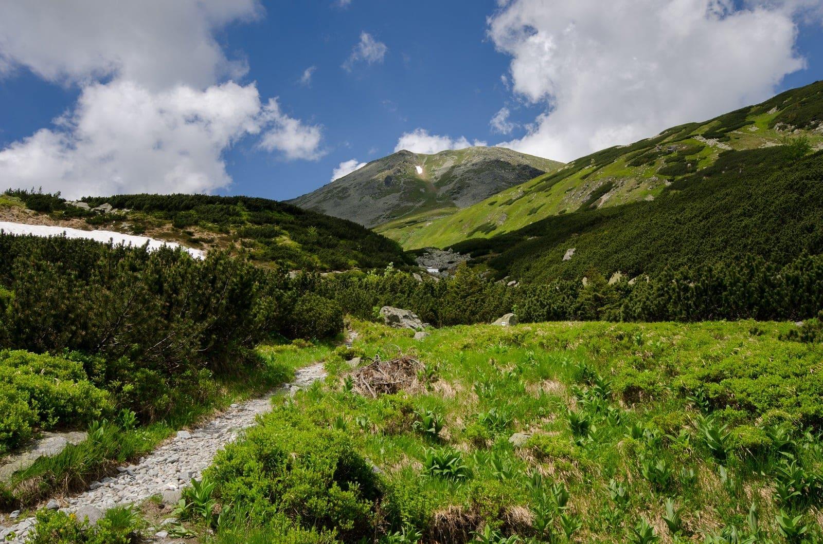Zelená dolina