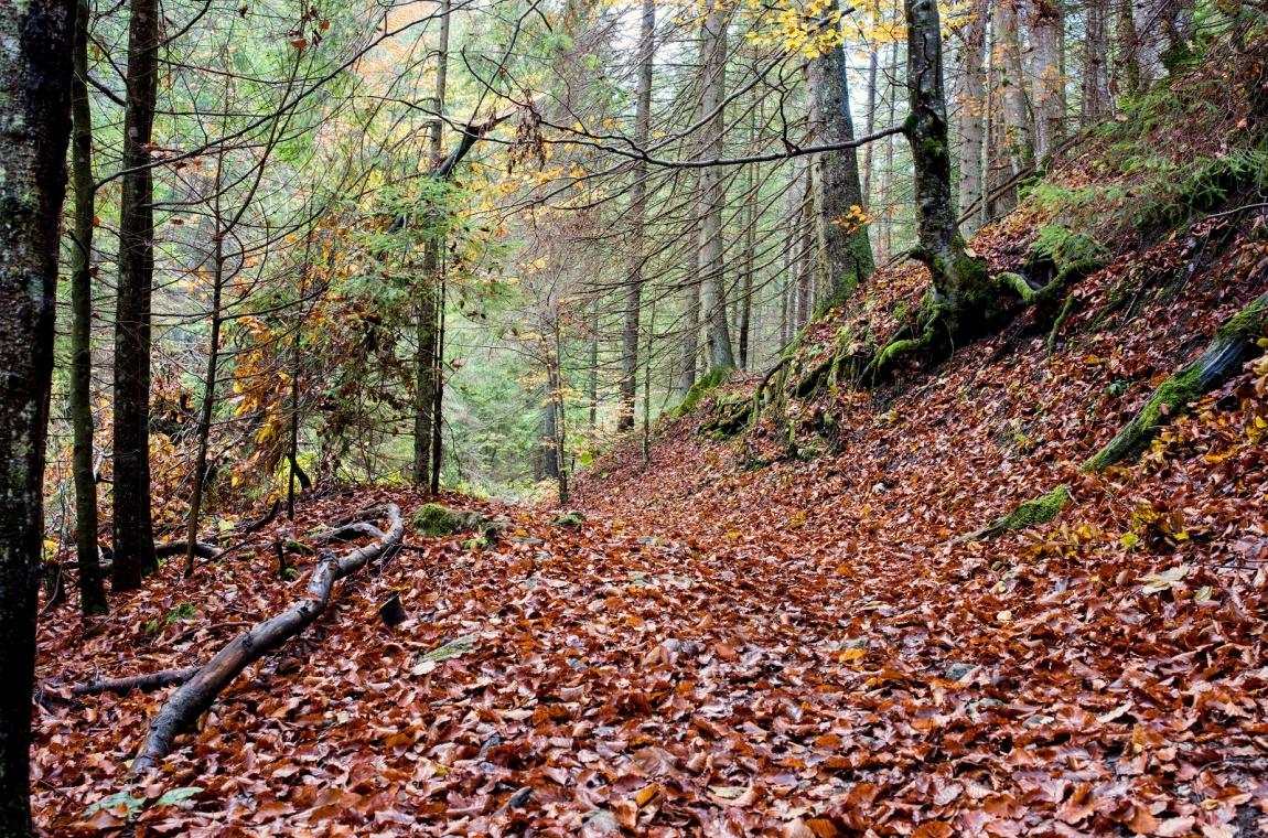 Les v Juráňové dolině