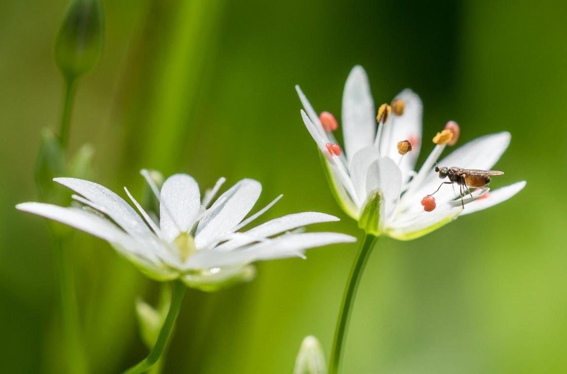 Květinová